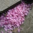 散り花吹き溜まり